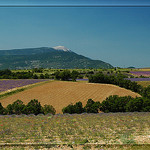 Couleurs de l'été, champs de couleurs by  -   Drôme Provence France