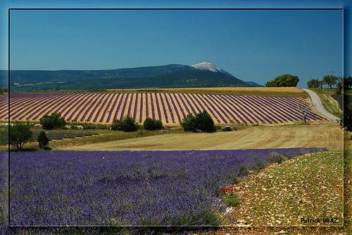 Mont Ventoux et relief de lavande par Patchok34