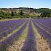 Montbrun les Bains et sa région (26) par Rémi Avignon - Montbrun les Bains 26570 Drôme Provence France