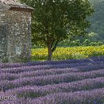 Lavande - Pont-de-Barret - Drôme Provençale by La Drôme - Pont-de-Barret 26160 Drôme Provence France