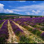 Champs de lavande Séderon by Patchok34 - Séderon 26560 Drôme Provence France