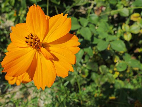 Fleur orange by k.deperrois