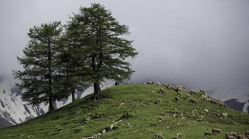 Le col du Parpaillon et ses moutons - montagne by Duez05