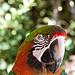 Perroquet au Zoo de Bandol-Sanary par Macré stéphane - Bandol 83150 Var Provence France