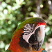 Perroquet au Zoo de Bandol-Sanary by  - Bandol 83150 Var Provence France