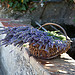 Lavenders from Provence by Belles Images by Sandra A. - Bargemon 83830 Var Provence France