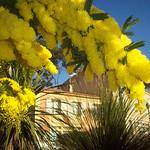 Bormes-les-Mimosas, Var. par Only Tradition - Bormes les Mimosas 83230 Var Provence France