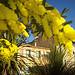 Bormes-les-Mimosas, Var. by myvalleylil1 - Bormes les Mimosas 83230 Var Provence France