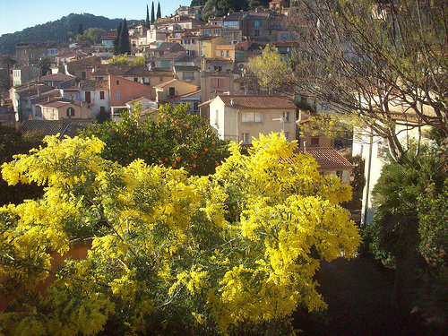 Bormes-les-Mimosas, Var. by Only Tradition