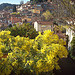 Bormes-les-Mimosas, Var. by myvalleylil1 - Bormes les Mimosas 83230 Var Provence France
