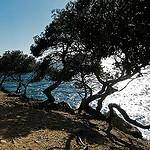 Dessinés par le vent Shaped by the wind par myvalleylil1 - Bormes les Mimosas 83230 Var Provence France