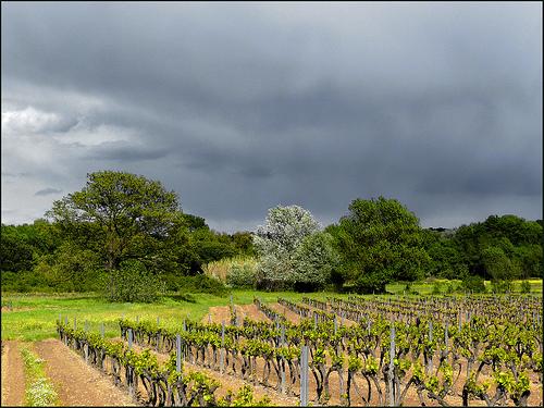 Lumière sur les vignes au printemps par myvalleylil1