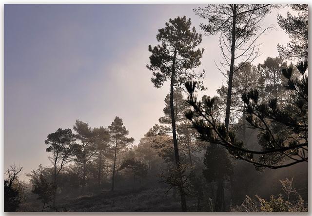 Par un matin frileux - Massif des Maures (Var - Collobrieres) par Charlottess