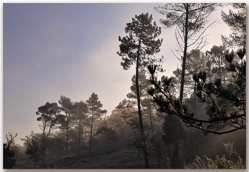 Par un matin frileux - Massif des Maures by Charlottess