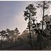 Par un matin frileux - Massif des Maures by Charlottess - Collobrieres 83610 Var Provence France