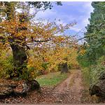 Chemin des châtaigners en automne par Charlottess - Collobrieres 83610 Var Provence France