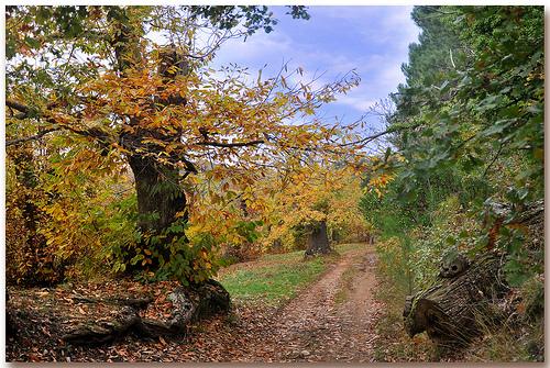 Chemin des châtaigners en automne par Charlottess