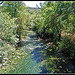 Green ! River at Correns France by M.Andries - Correns 83570 Var Provence France