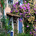 Le mur fleuri - Grimaud by Belles Images by Sandra A. - Grimaud 83310 Var Provence France