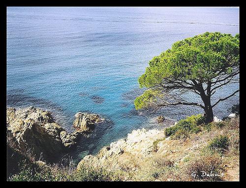 Côte d'Azur - Cap Lardier by g_dubois_fr