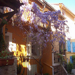 Glycines. Le Rocher, La Garde, Var. par Only Tradition - La Garde 83130 Var Provence France