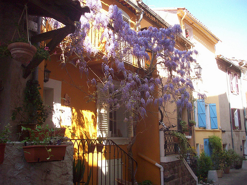 Glycines. Le Rocher, La Garde, Var. par Only Tradition