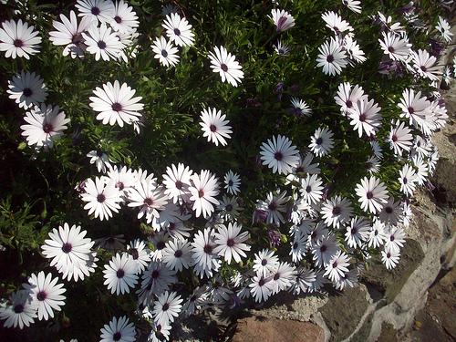 fleurs d 39 avril le rocher la garde var la garde var we love provence. Black Bedroom Furniture Sets. Home Design Ideas