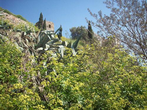 Le Rocher. La Garde, Var. par Only Tradition
