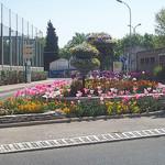 Massif floral. La Garde, Var. par Only Tradition - La Garde 83130 Var Provence France