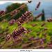 Fleurs des Champs by Letzia - Le Castellet 83330 Var Provence France