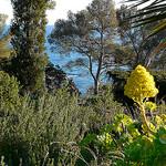 Jardins du Rayol by myvalleylil1 - Rayol Canadel sur Mer 83820 Var Provence France
