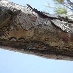 Les Lecques - Une cigale bien cachée par  - Les Lecques 83270 Var Provence France