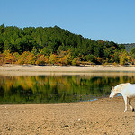Crin Blanc perdu ? - Lac de Sainte-Croix par Charlottess - Les Salles sur Verdon 83630 Var Provence France