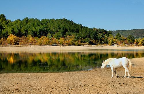 Crin Blanc perdu ? - Lac de Sainte-Croix by Charlottess