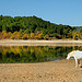 Crin Blanc perdu ? - Lac de Sainte-Croix by Charlottess - Les Salles sur Verdon 83630 Var Provence France