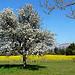 Les couleurs du printemps sont arrivées by myvalleylil1. - Plan d'Aups 83640 Var Provence France