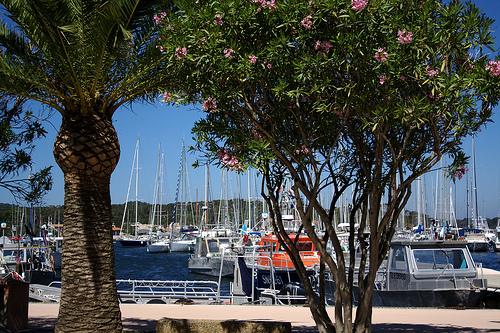 Port de porquerolles by Anhariel