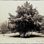 La Neige à Pourrières par Tinou61 - Pourrieres 83910 Var Provence France
