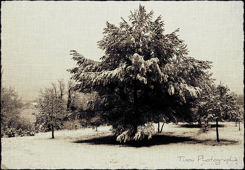 La Neige à Pourrières par Tinou61