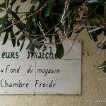 Fleurs fraiches par Niouz - Ramatuelle 83350 Var Provence France