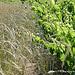 Vigne et blé by Niouz - Ramatuelle 83350 Var Provence France