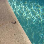 Fourmie en vacances par  - Rayol Canadel sur Mer 83820 Var Provence France