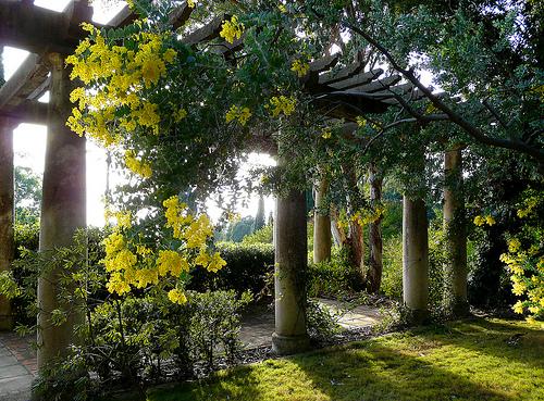 Le mimosa est déjà en fleurs by myvalleylil1