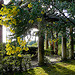 Le mimosa est déjà en fleurs par myvalleylil1 - Rayol Canadel sur Mer 83820 Var Provence France