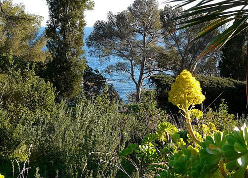 Jardins du Rayol by myvalleylil1