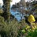 Jardins du Rayol par myvalleylil1 - Rayol Canadel sur Mer 83820 Var Provence France