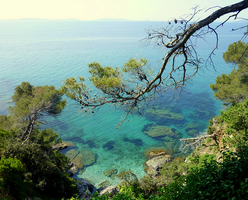 Domaine Du Rayol Jardin De La Mediterranee Rayol Canadel Sur Mer