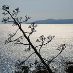 Domaine du Rayol - vue sur la Méditerranée par maybeairline - Rayol Canadel sur Mer 83820 Var Provence France