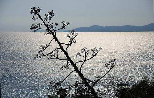 Domaine du Rayol - vue sur la Méditerranée by maybeairline