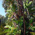 Jardin du Rayol by JMMProject - Rayol Canadel sur Mer 83820 Var Provence France